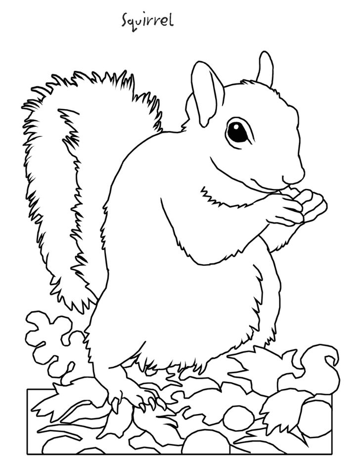 736x952 Printable Hibernation Coloring Pages