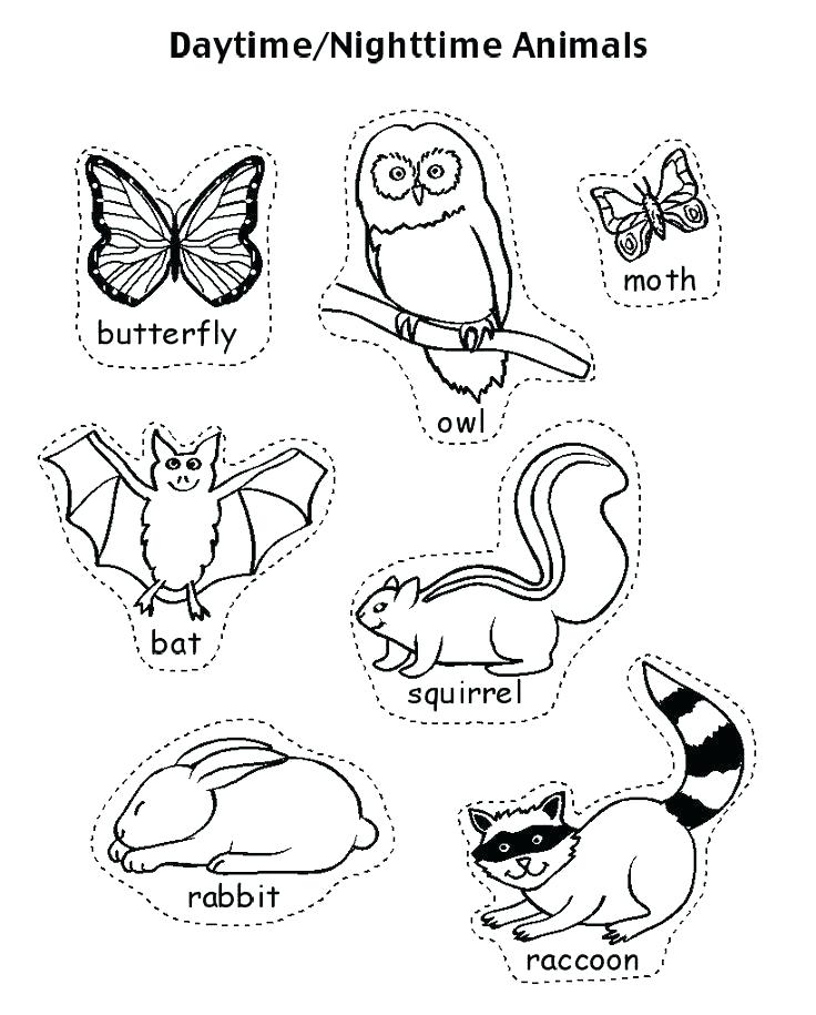 736x915 Stuffed Animal Coloring Pages Nocturnal Animals Coloring Pages