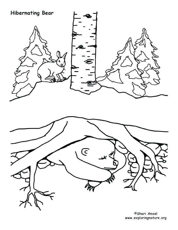 612x792 Hibernating Animals Coloring Pages Click The Hibernating Bear