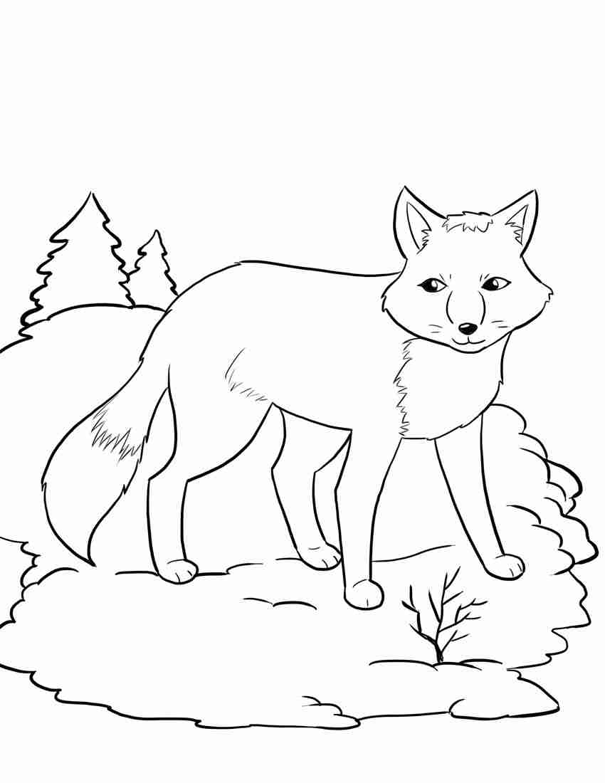 850x1100 Hibernating Bear Color Sheet Coloring Page Preschool January