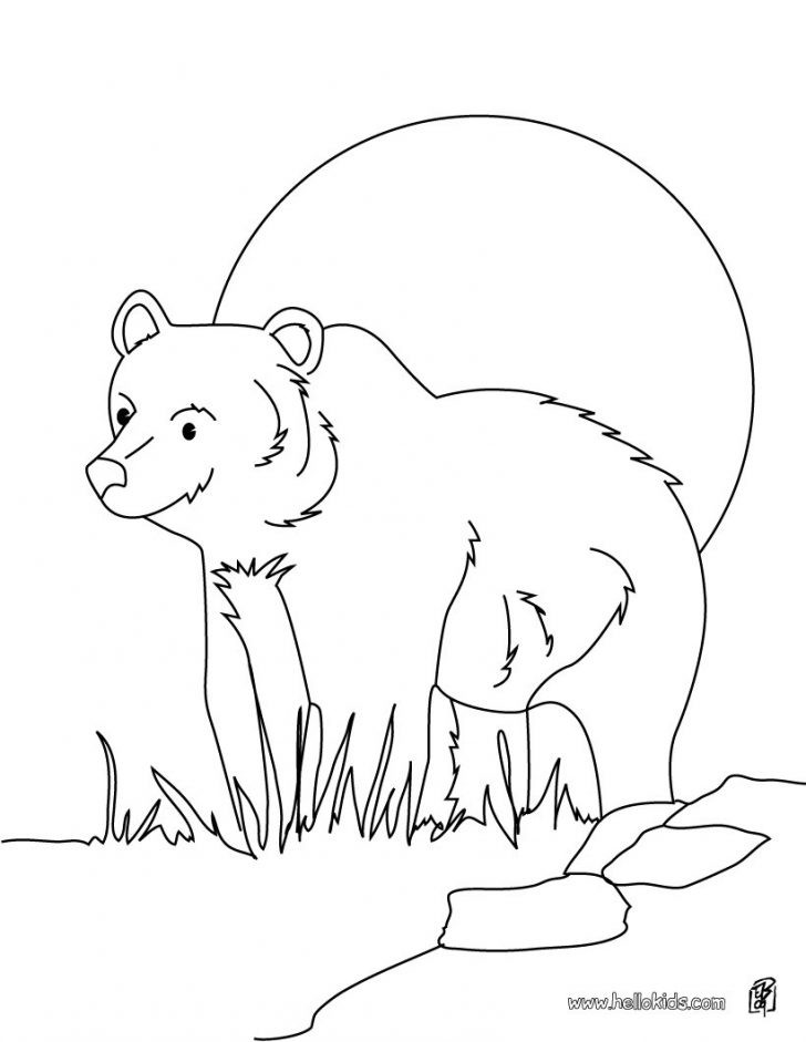 728x941 Awesome Grizzly Bear Coloring Page Hibernating Bear Coloring Page