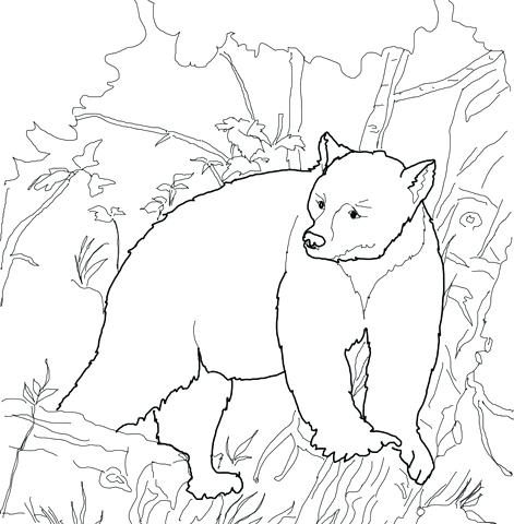 471x480 Pagina Para Colorear De Hibernating Bear Bear Coloring Page