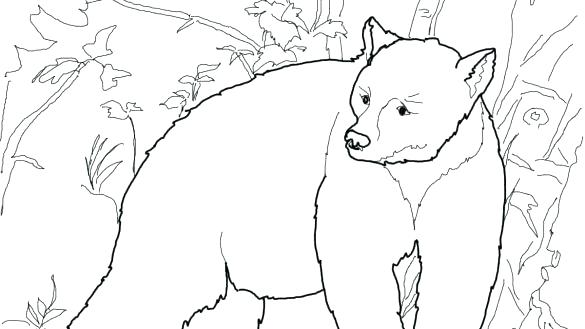 585x329 Black Bear Coloring Pages Coloring Book Black Bears Pages Free