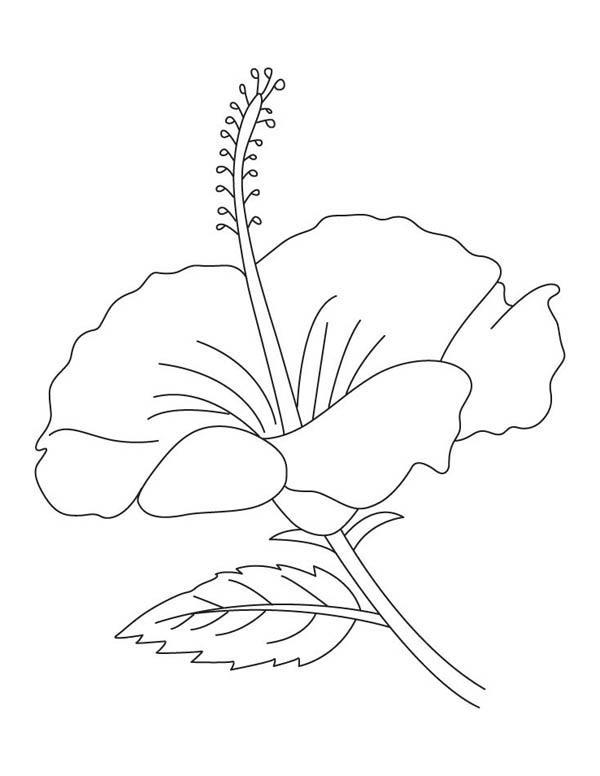 600x776 Hibiscus Flower Coloring Page Color Luna
