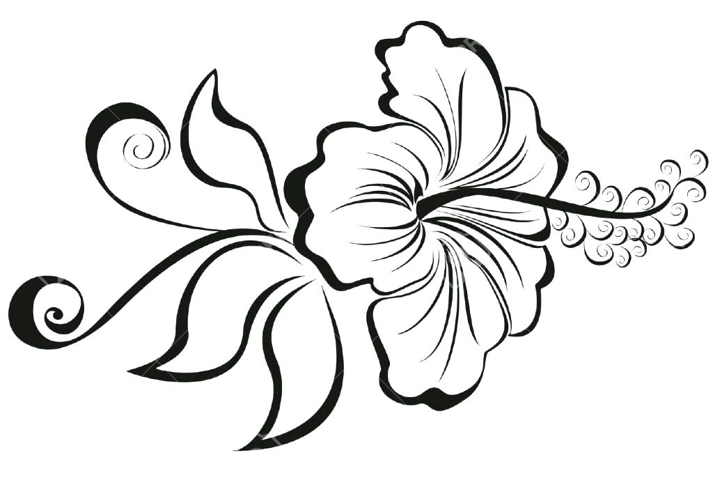 1024x722 Hibiscus Flower Coloring Pages Free Hibiscus Flower Coloring Pages