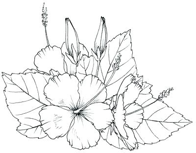 400x312 Hibiscus Flower Coloring Pages Hibiscus Coloring Pages Find This
