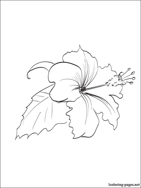 560x750 Hibiscus Coloring Page Coloring Pages