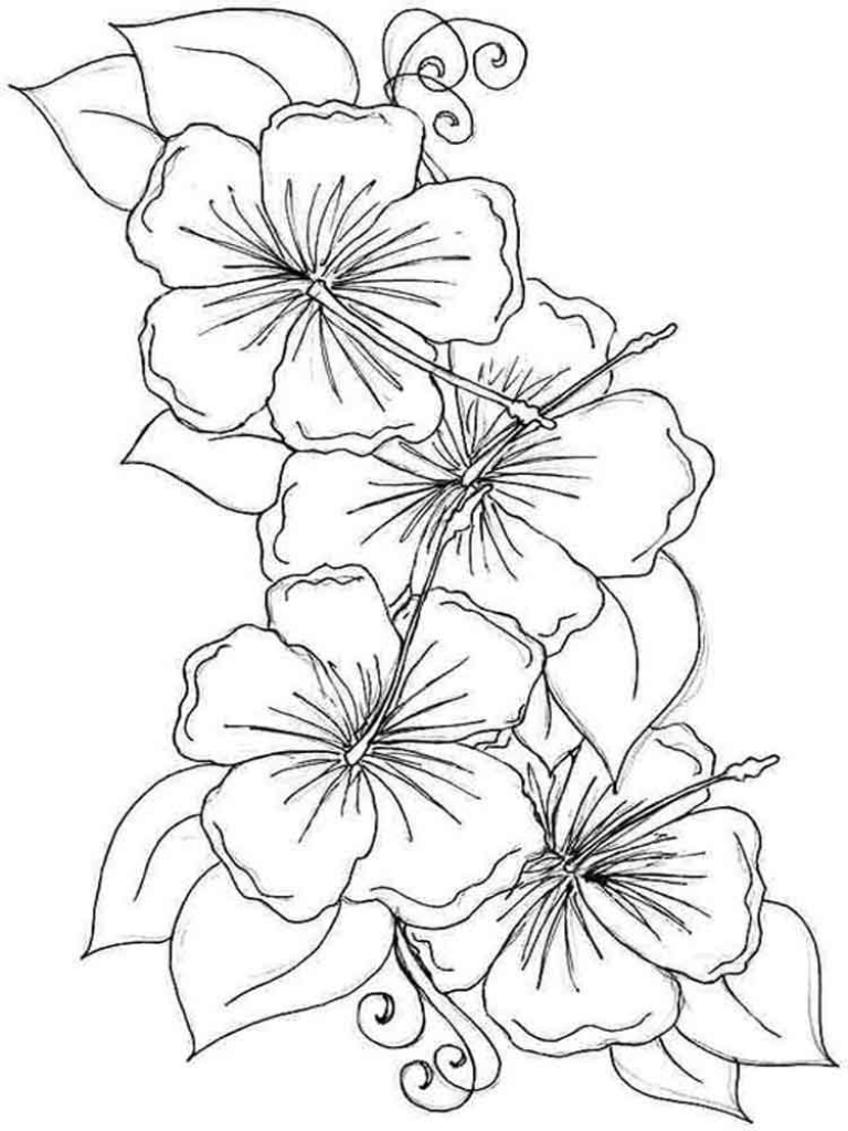 768x1024 Hibiscus Coloring Page Flower Pages Download And Print Umcubed