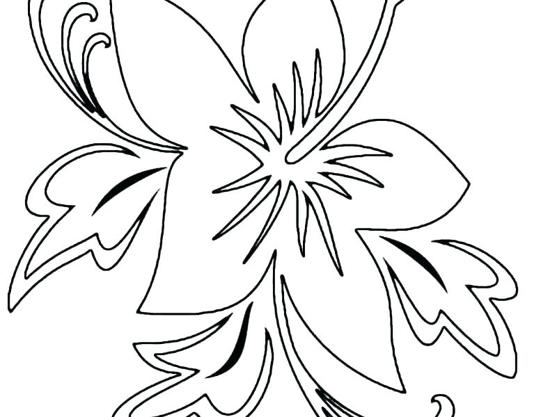 800x600 Draw Hibiscus Coloring Page With Additional Picture Appealing