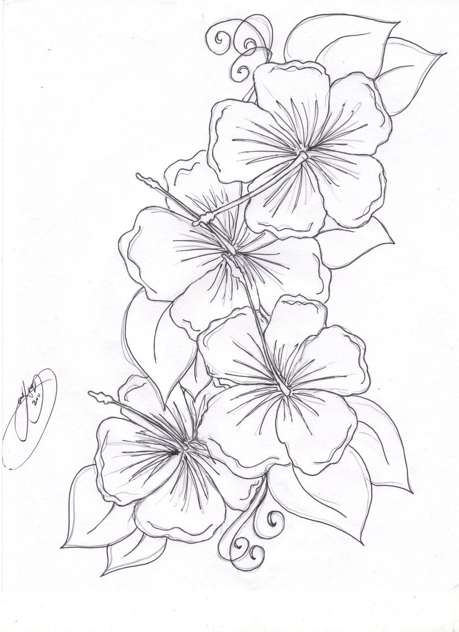 900x1239 Hibiscus Coloring Pages Hibiscus Coloring Page Drawing