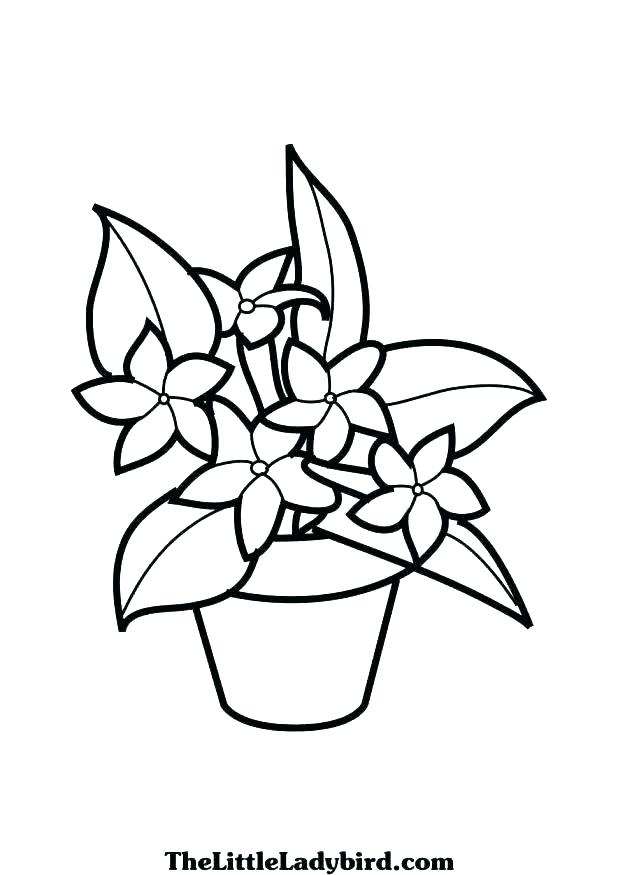 618x875 Hibiscus Coloring Pages