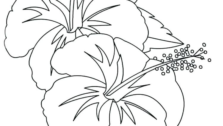 750x425 Hibiscus Flower Coloring Pages