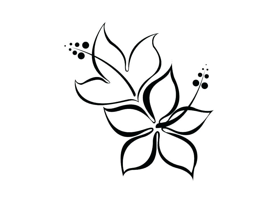 970x728 Printable Hibiscus Coloring Pages Vanda