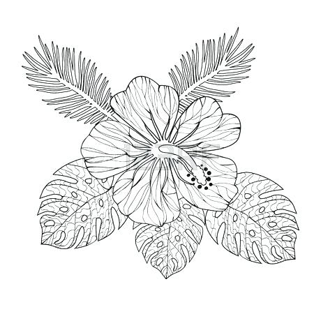 450x450 Hibiscus Coloring Page Or Flowers Coloring Pages Preschool