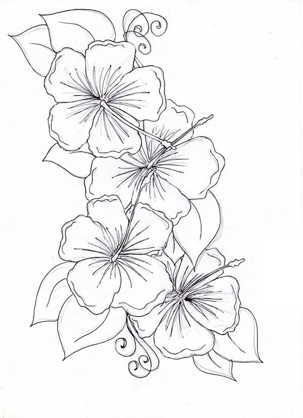 600x826 Hibiscus Flower, Hibiscus Flower Drawing Coloring Page