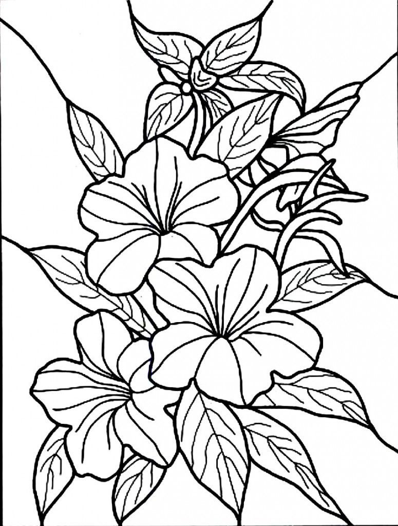 775x1024 Hibiscus Flower Coloring Page