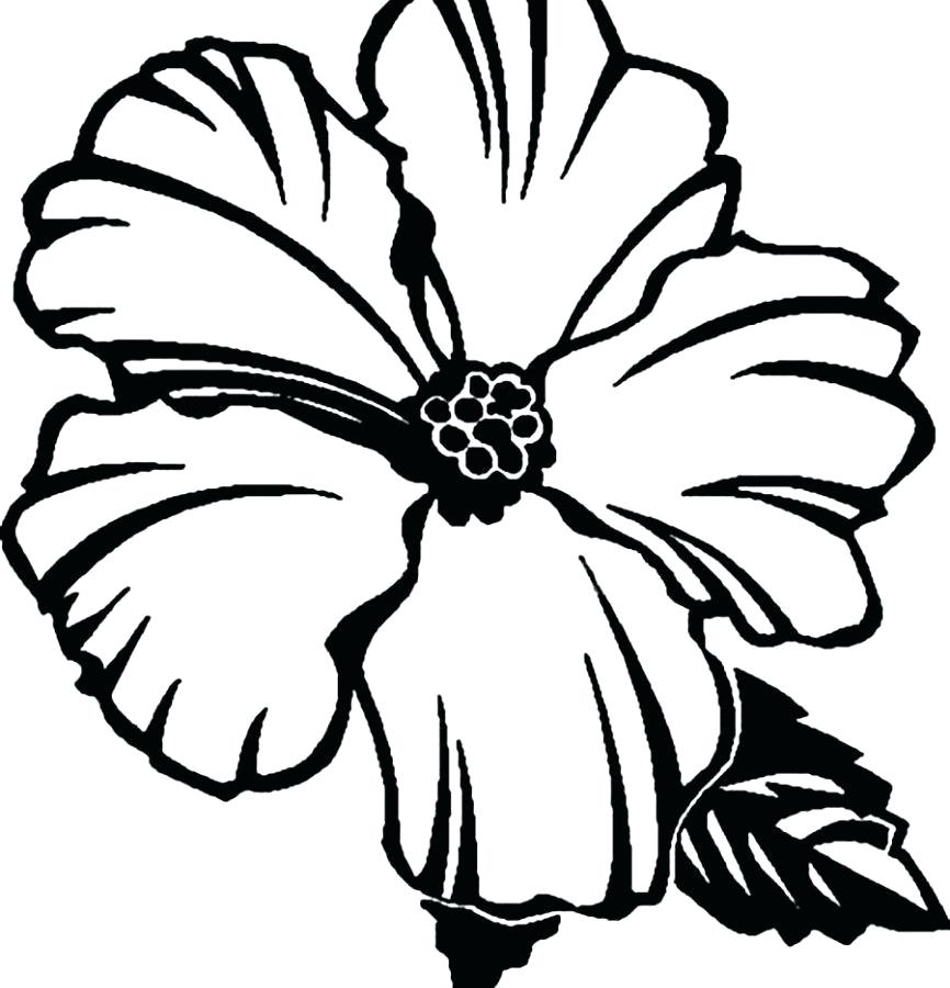 866x900 Hibiscus Flower Coloring Page Realistic Flowers Pages For Kids