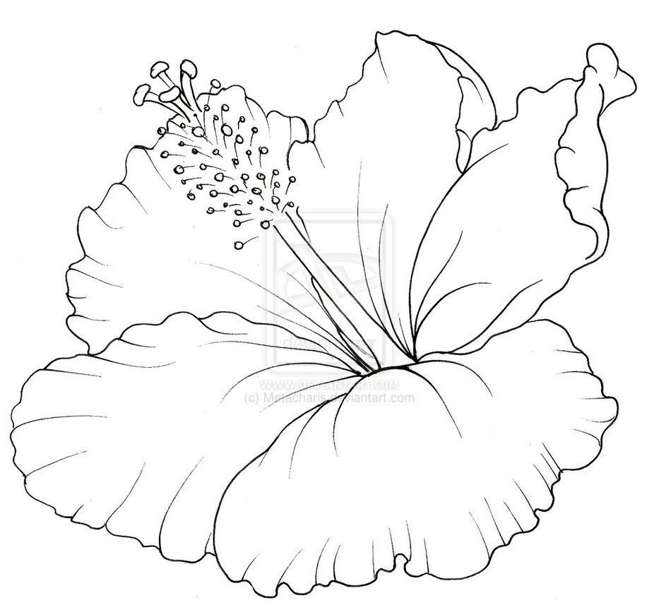 933x857 Hibiscus Flower Coloring Pages Wagashiya
