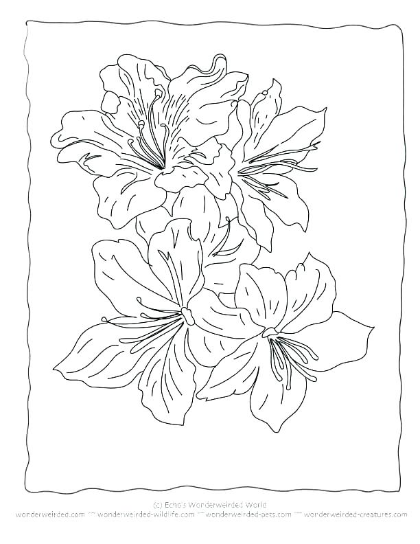 612x792 Hibiscus Flower Coloring Pages Free Printable Hibiscus Coloring
