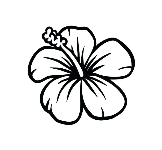 671x623 Hibiscus Flower Coloring Pages New Flowers Coloring Pages