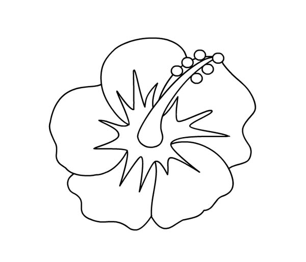 600x514 Hibiscus Flower Picture Coloring Page Color Luna
