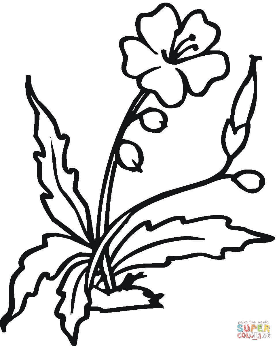 962x1200 Flower Coloring Pages To Print Hibiscus Page For Kids Flowers Free