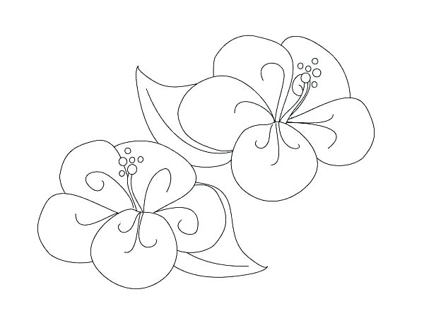 600x464 Printable Hibiscus Flower Coloring Pages Draw Floral Fancy Page F
