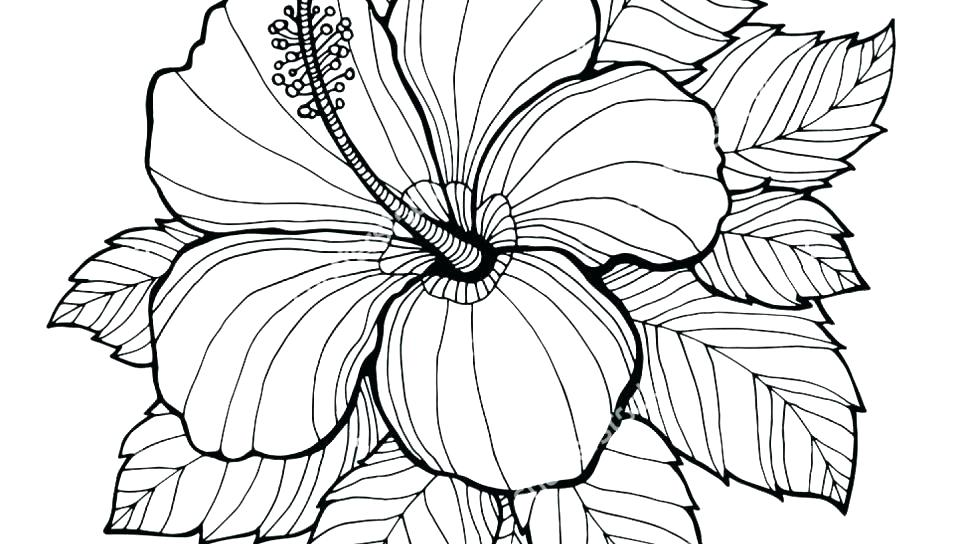 960x544 Printable Flowers Coloring Pages