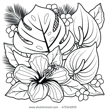 450x470 Hibiscus Coloring Pages Hibiscus Flower Coloring Page Flower