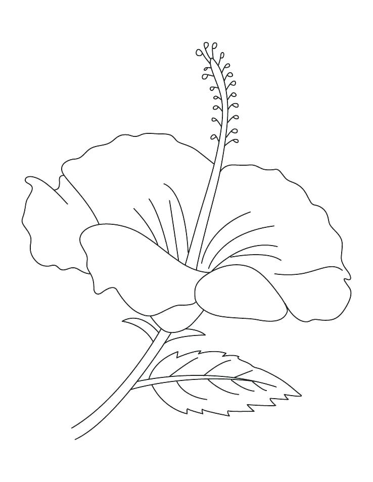 738x954 Hibiscus Coloring Pages Hibiscus Flower Coloring Page Hibiscus