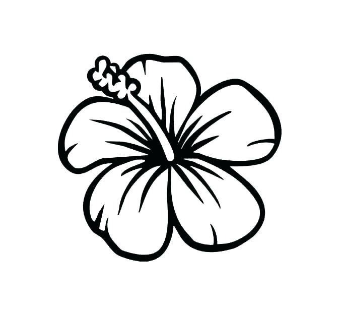 671x623 Hibiscus Flower Coloring Pages Hibiscus Flower Coloring Pages Free