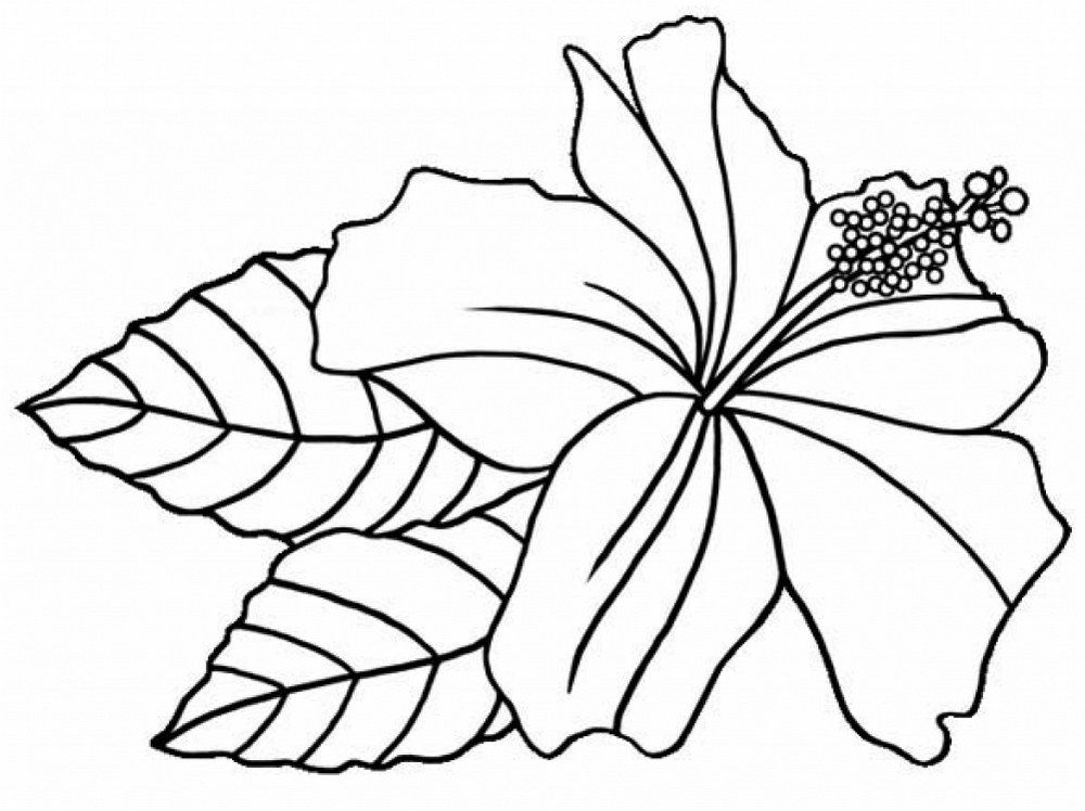 1000x748 Hibiscus Flower Printable Coloring Sheets Floriculture Flower
