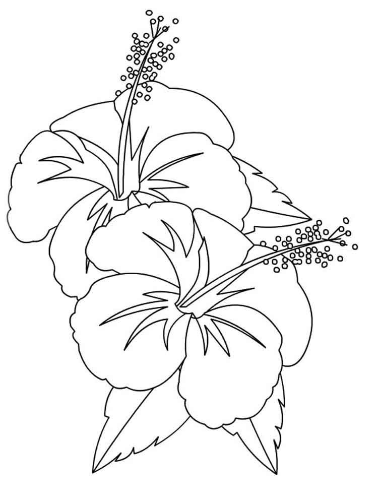 750x1000 Hibiscus Coloring Page Hibiscus Flower Coloring Pages Download
