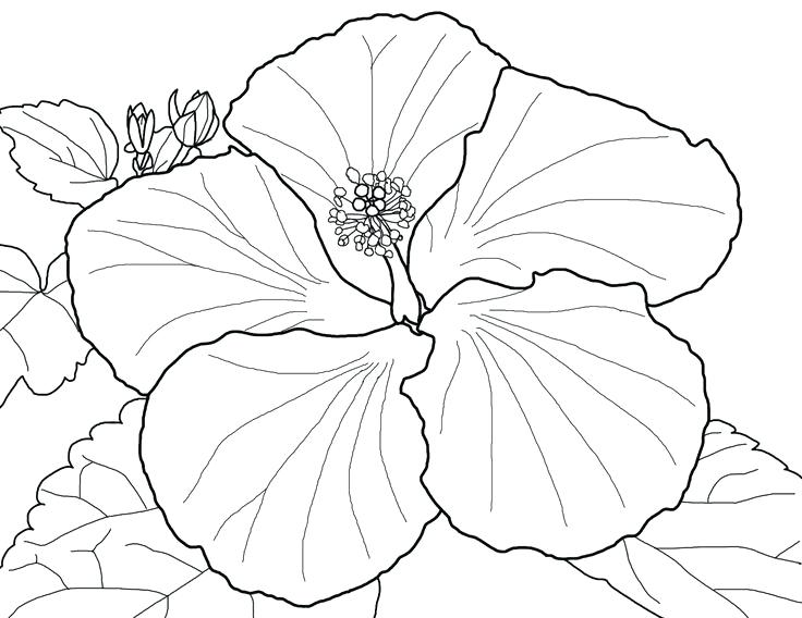 736x568 Best Flower Coloring Pages Images On Coloring Pages Spring Flowers