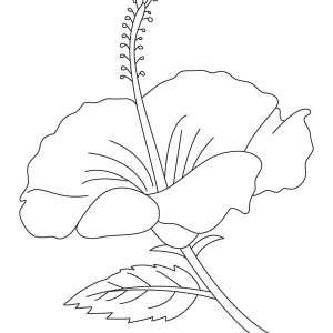 300x300 Blooming Hibiscus Flower Coloring Page Color Luna