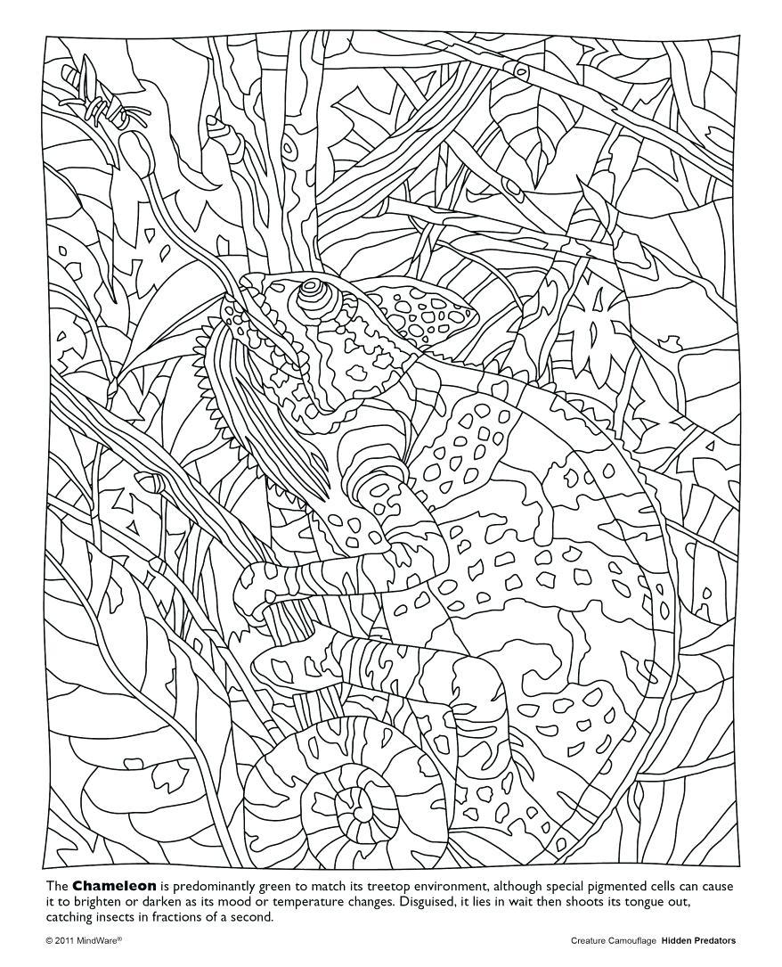 878x1085 Color Counts Coloring Pages Hidden Picture