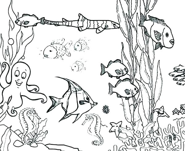 600x490 Hidden Pictures Coloring Pages Printable Ocean Pictures Printable