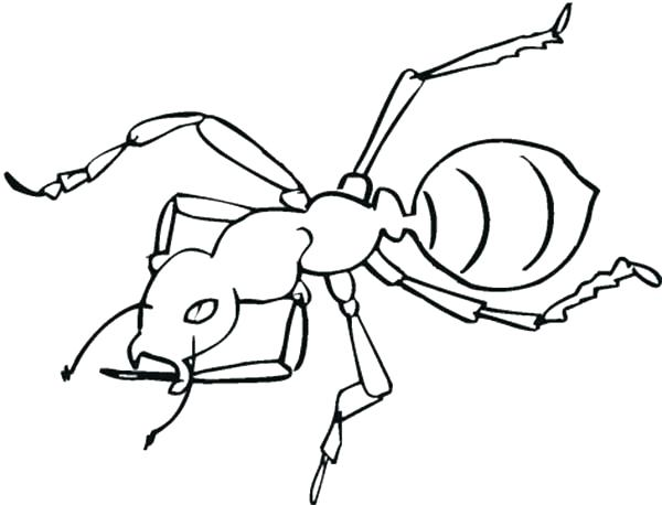 600x458 Ant Coloring Page Ant Coloring Page Awesome Worker Ant Coloring
