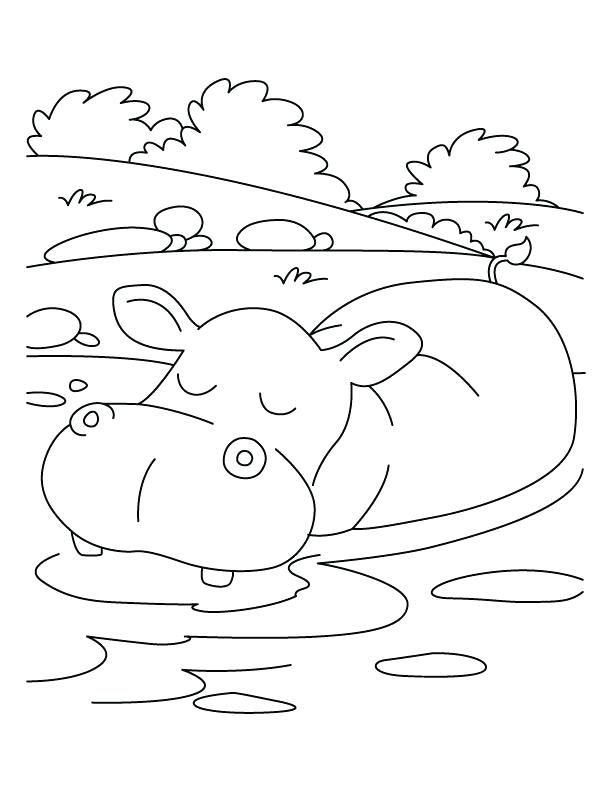 612x792 Hippo Coloring Pages Mural Hippo With Baby Reversed Coloring Page