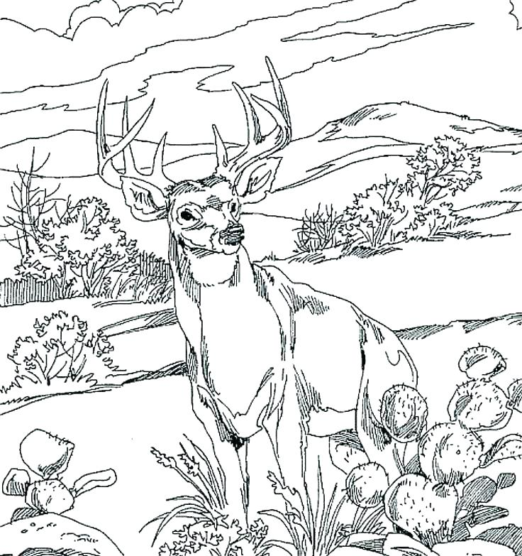 736x783 Hunting Coloring Pages Hunting Coloring Book Also Hunting Coloring