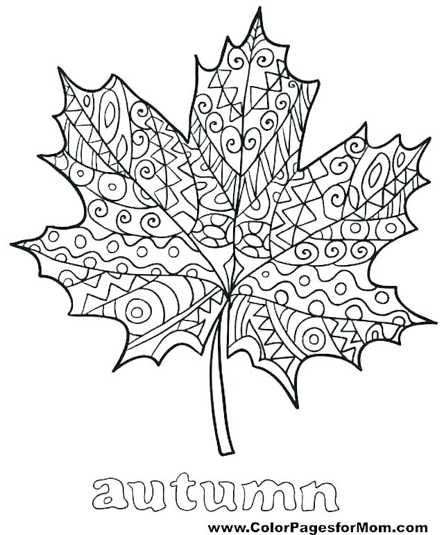 640x771 Holly Leaves Coloring Pages Leaves Coloring Pages Good Jungle