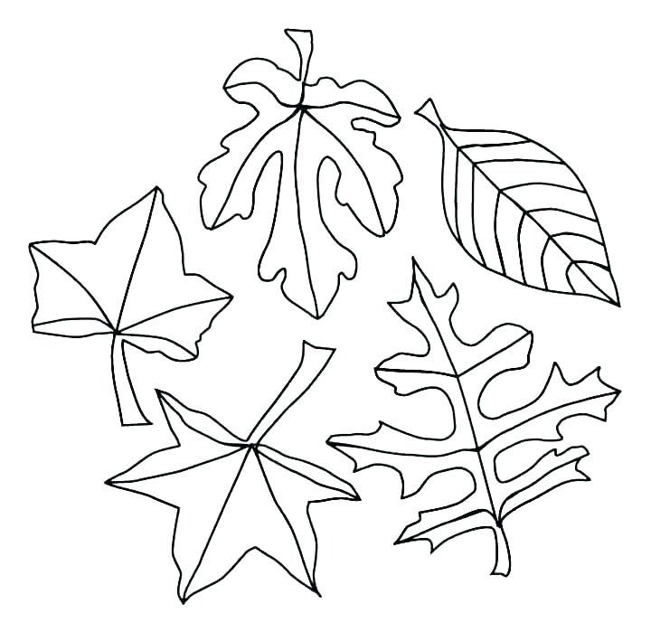 720x699 Holly Leaves Coloring Pages Leaves Coloring Pages Palm Leaf