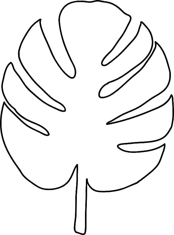 557x753 Leaf Coloring Pages Leaf Outline Printable Template Holly Stencils