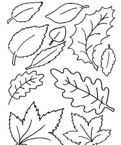 425x510 New Maple Leaf Coloring Page Free Coloring Holly Leaf Template