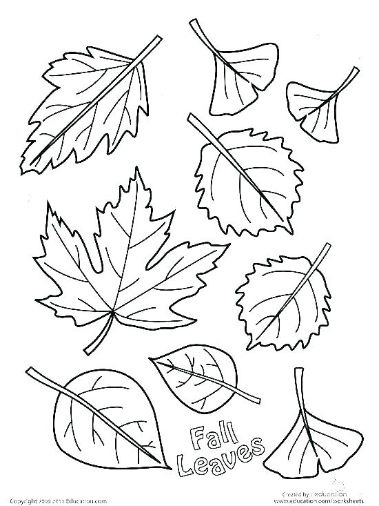 550x733 Leaves Coloring Pages