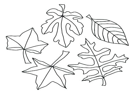 476x333 Coloring Pages Leaves Printable Leaves Coloring Pages Leaf