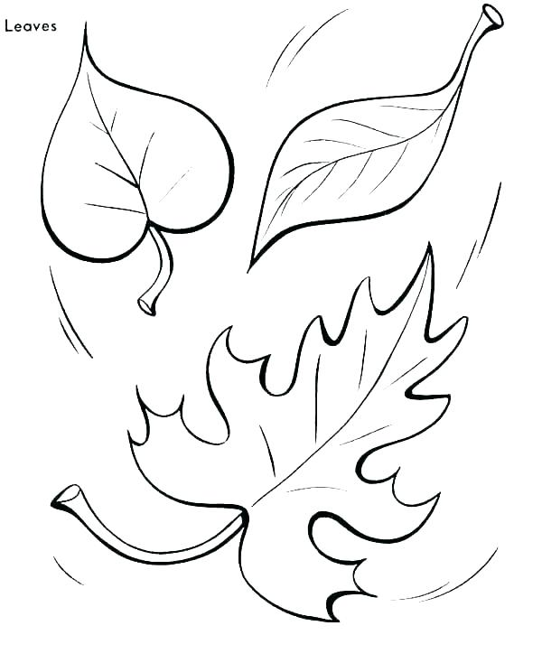 600x734 Coloring Pages Of Leaves Autumn Leaf Coloring Pages Leaves
