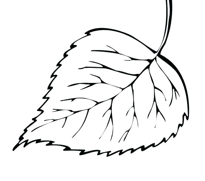 678x600 Coloring Pages Of Leaves Coloring A Leaf Printable Leaves Coloring