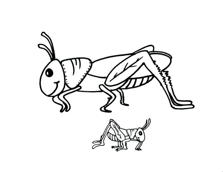 906x700 Grasshopper Coloring Pages This Section Includes Enjoyable