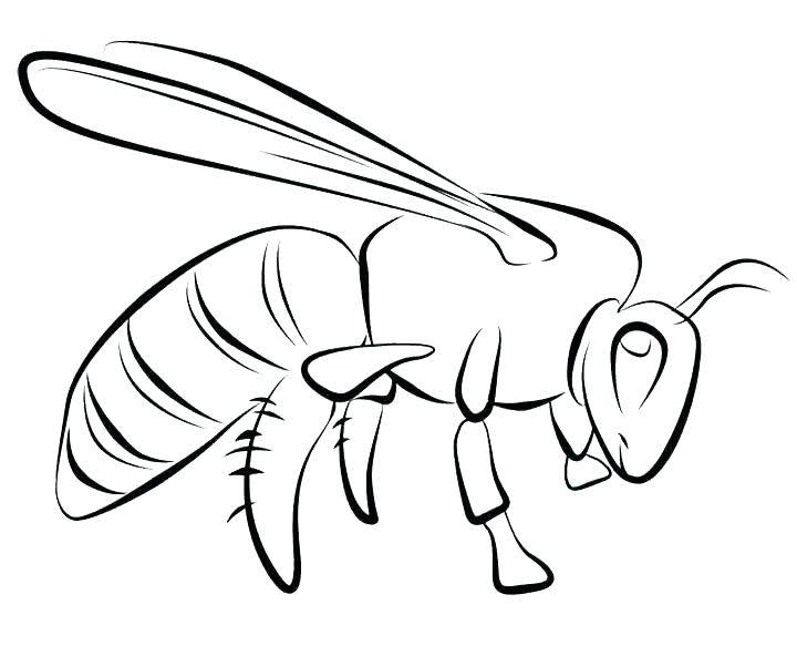 720x592 Beehive Coloring Page Honey Bee Coloring Pages Honey Bee Pictures